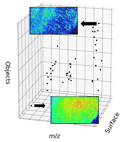 Morphometry can help develop mass spectrometry imaging